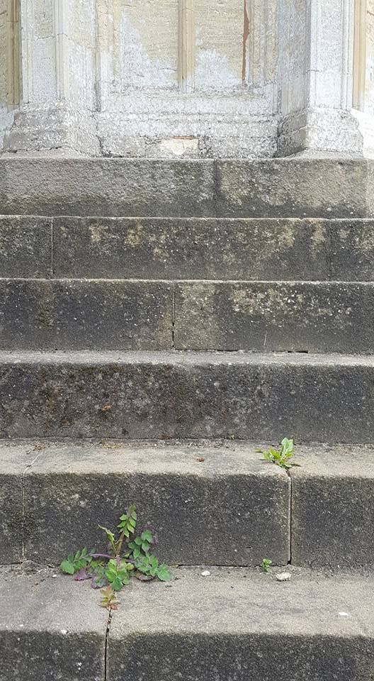 Cross steps with plants