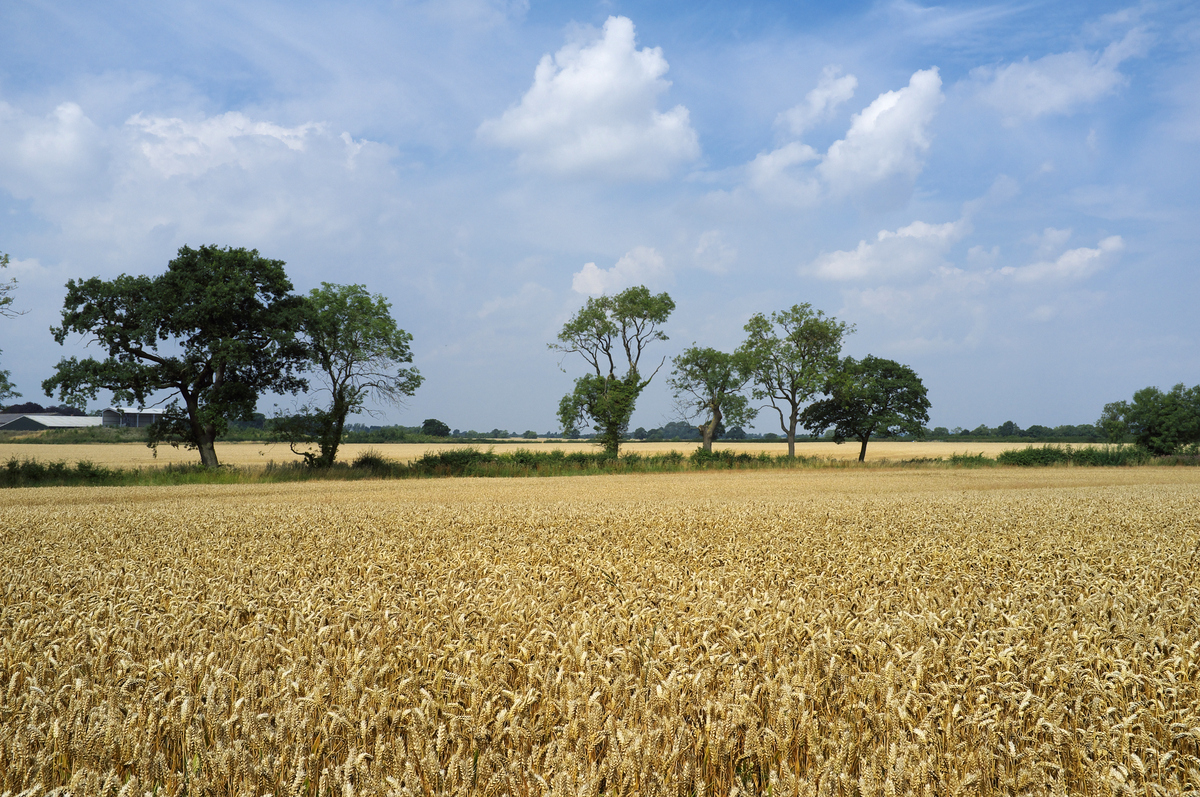 Bosworth_Battlefield_(Fenn_Lane_Farm) CC DaveLeicuk