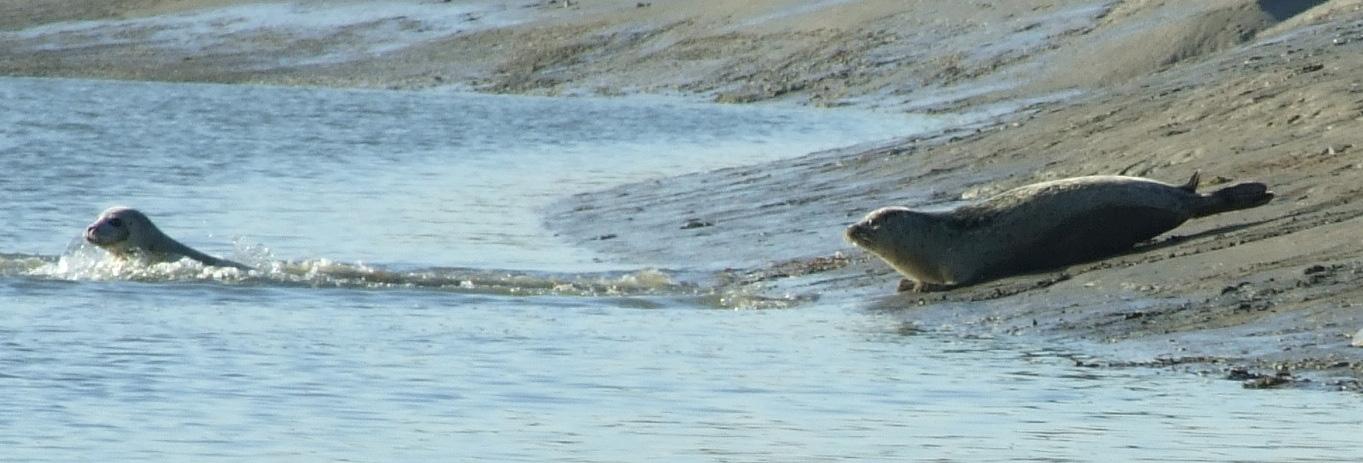 Seals-Goodwins-Web